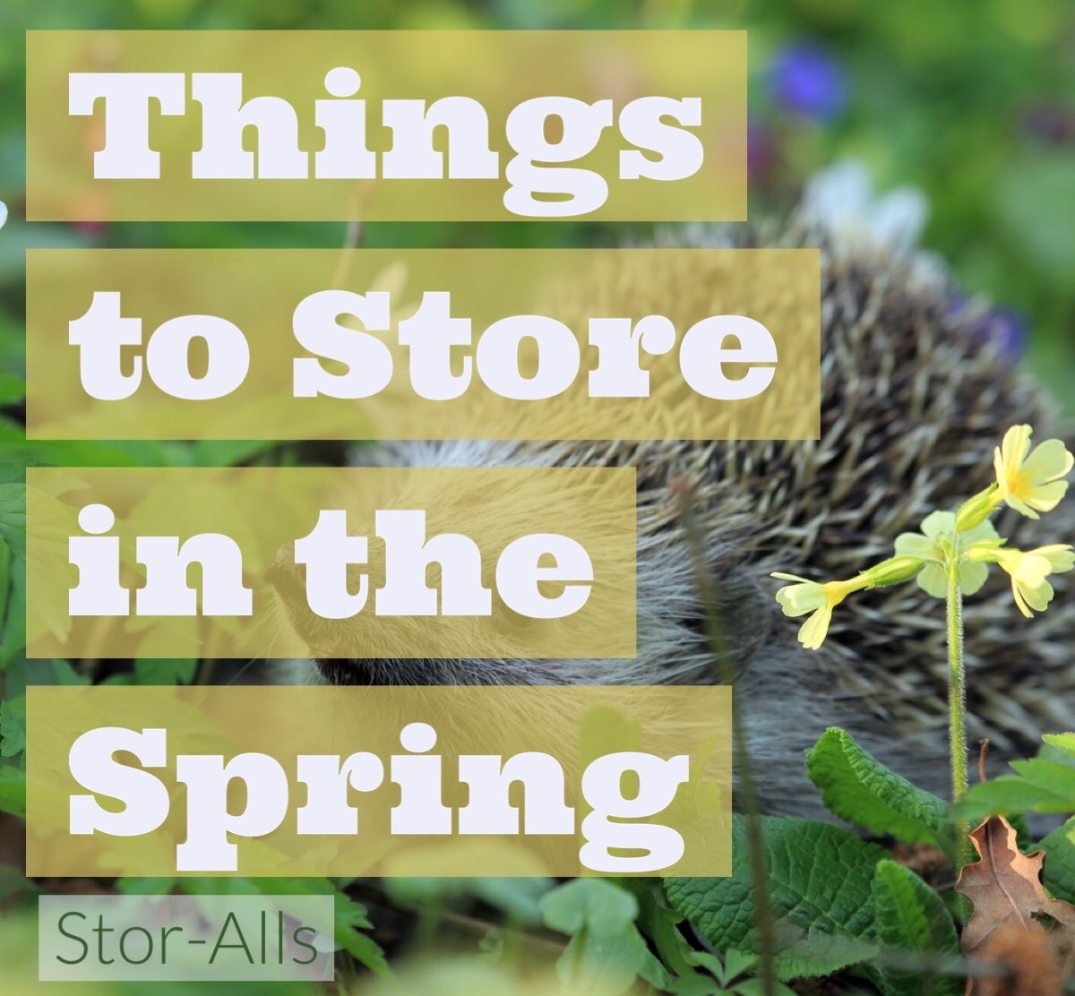 Things to Store in the Spring
